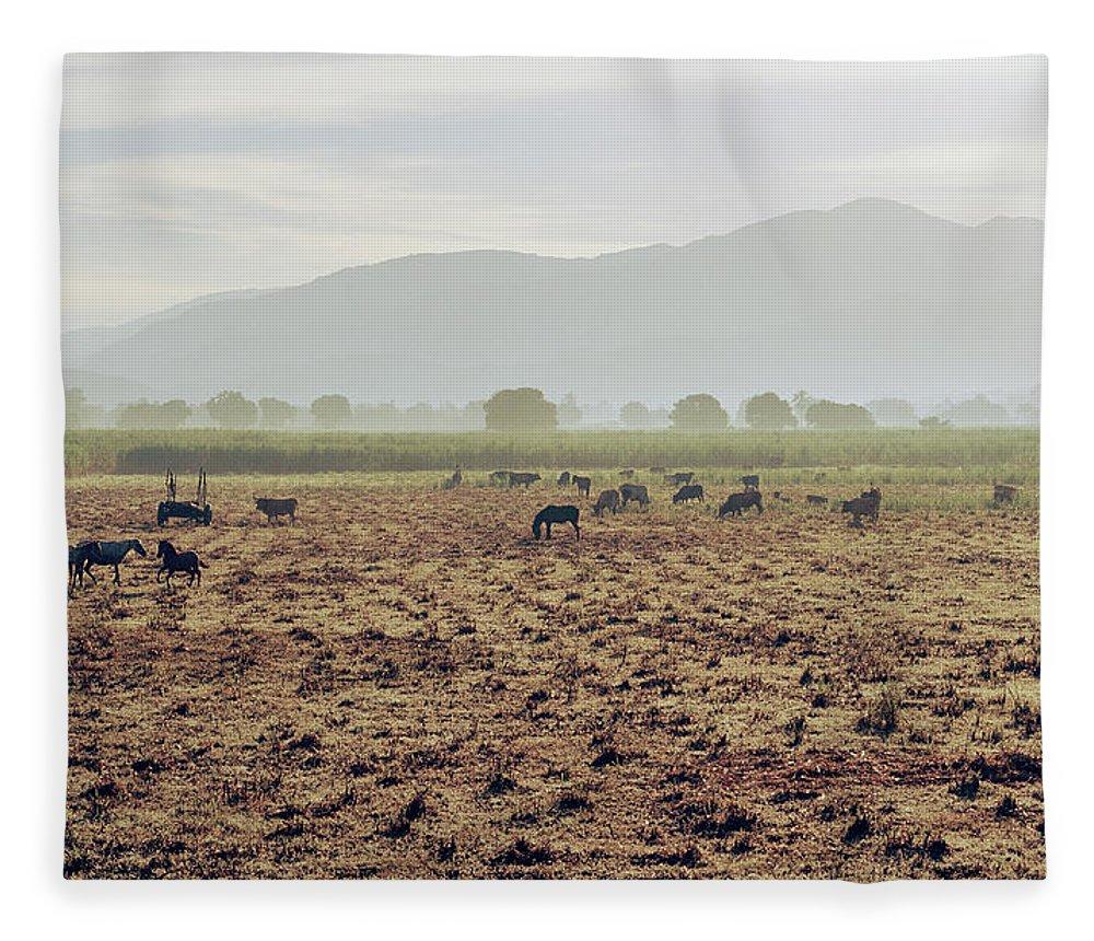 Horse Fleece Blanket featuring the photograph Livestock On A Farm Land Near Jacmel by Cultura Exclusive/philip Lee Harvey