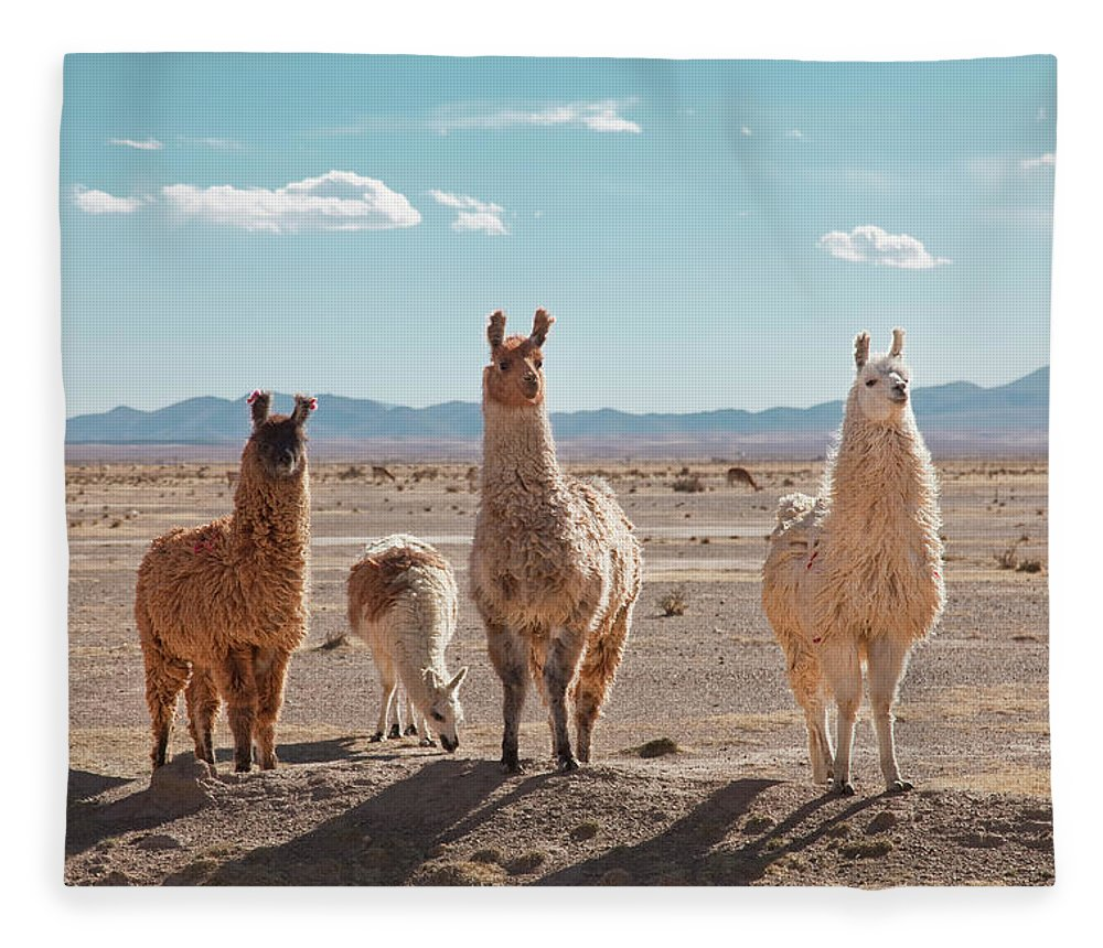 Shadow Fleece Blanket featuring the photograph Llamas Posing In High Desert by Kathrin Ziegler