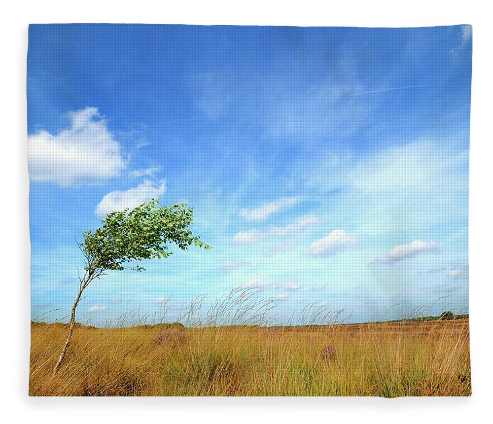 Scenics Fleece Blanket featuring the photograph Lonesome Tree Swept By The Wind by Nikitje
