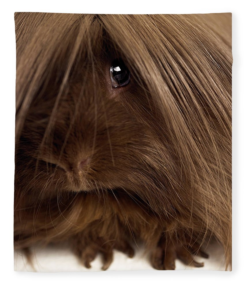 Pets Fleece Blanket featuring the photograph Long Haired Guinea Pig, Close-up by Michael Blann
