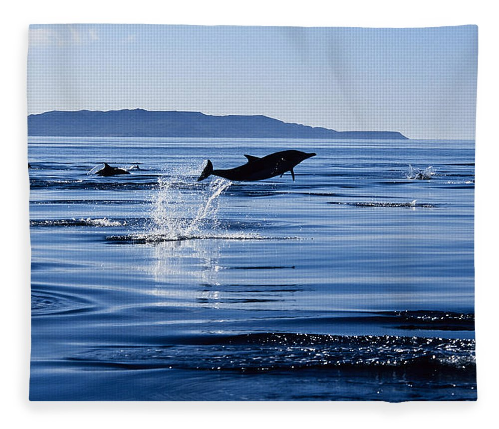 Latin America Fleece Blanket featuring the photograph Long-nosed Common Dolphin,delphinus by Gerard Soury