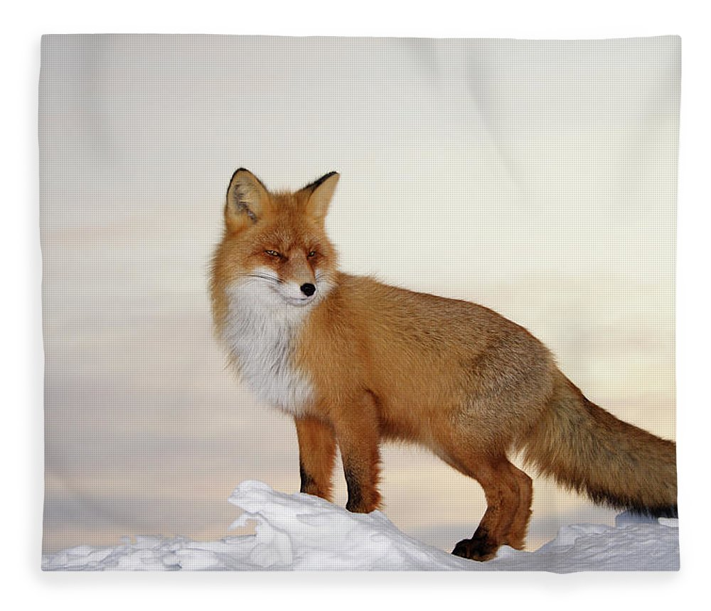 Black Color Fleece Blanket featuring the photograph Majestic Fox by Dmitrynd