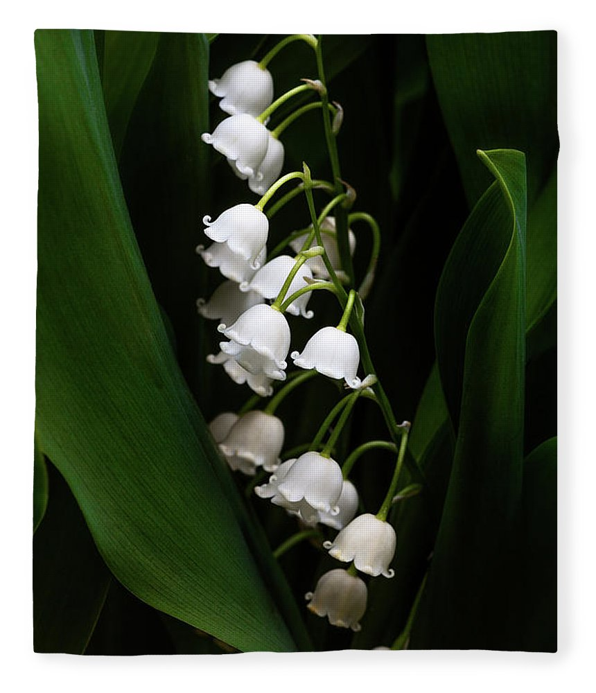 Convallaria Majalis Fleece Blanket featuring the photograph May Lily Aka Lily Of The Valley by Tom Mc Nemar