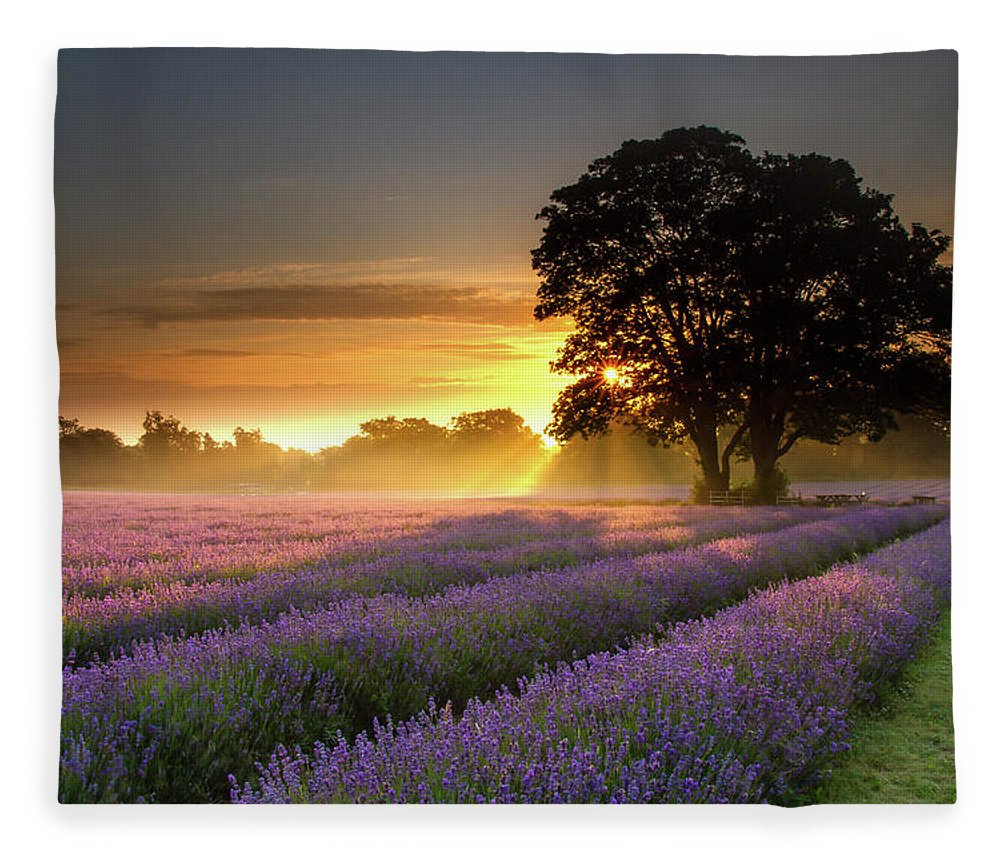 Tranquility Fleece Blanket featuring the photograph Mayfair Lavender At Sunrise by Getty Images