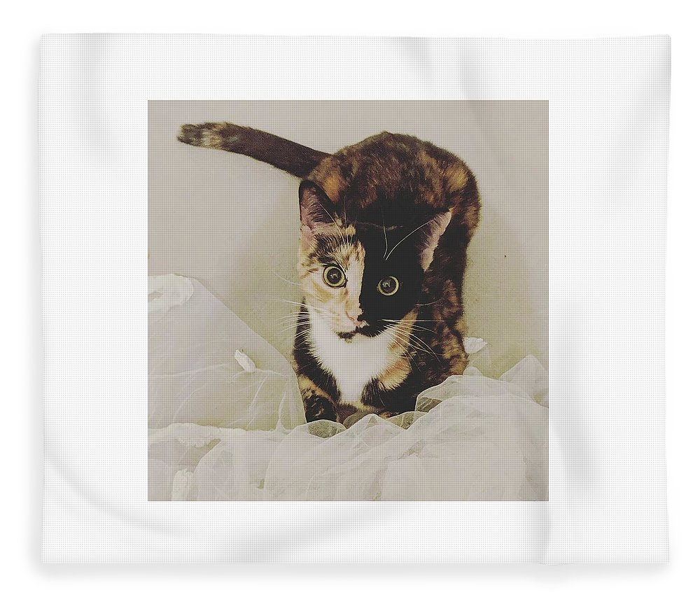 Cute Cat Fleece Blanket featuring the photograph Meet Star by Star And Ray