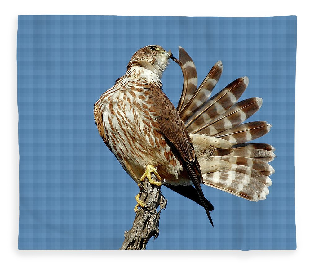 Animal Themes Fleece Blanket featuring the photograph Merlins Grooming Session by Bmse