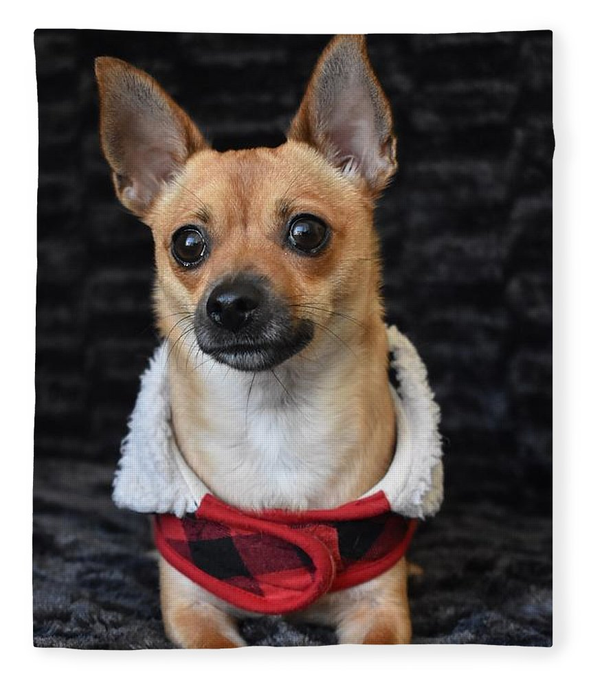 Chihuahua Fleece Blanket featuring the digital art Miracle by Cassidy Marshall