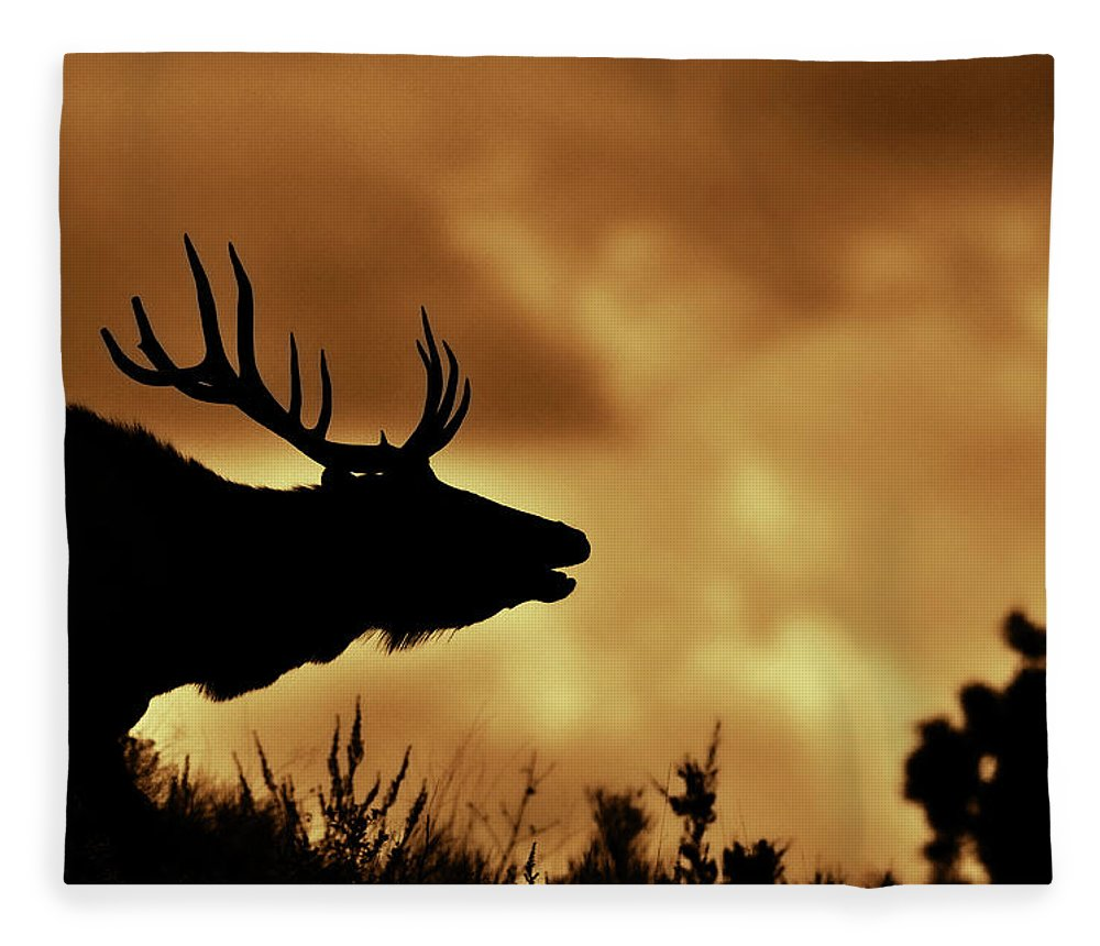 Animal Themes Fleece Blanket featuring the photograph Moose At Sunrise by Photo By James Keith