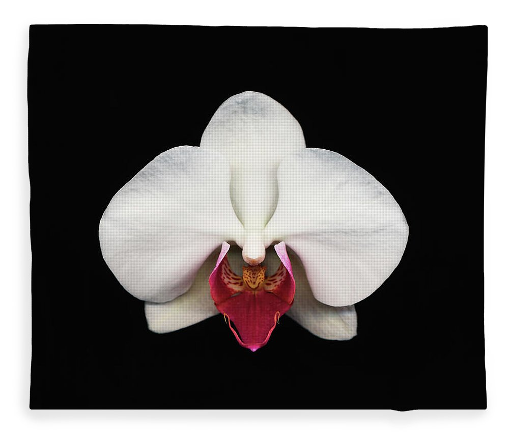 Black Background Fleece Blanket featuring the photograph Moth Orchid Against Black Background by Mike Hill