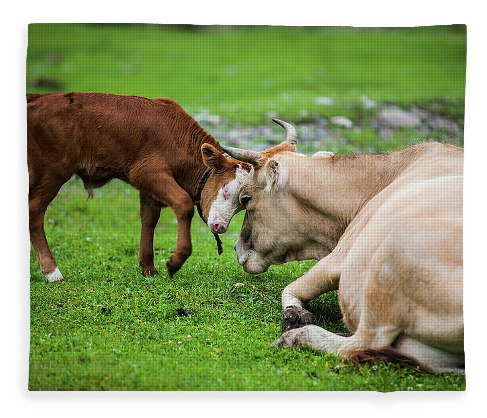 Grass Fleece Blanket featuring the photograph Mother And Son by Zhouyousifang