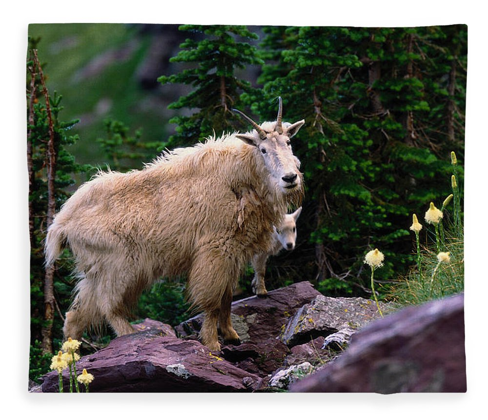 Animal Themes Fleece Blanket featuring the photograph Mountain Goat Oreamnos Americanus by Art Wolfe