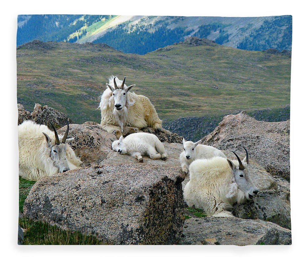 Horned Fleece Blanket featuring the photograph Mountain Goats In The Rocky Mountains by Carl Neufelder