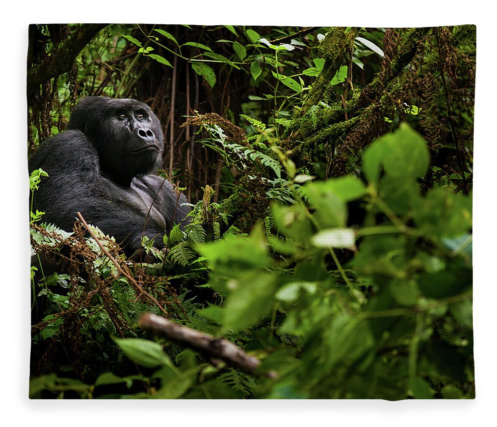 Vertebrate Fleece Blanket featuring the photograph Mountain Gorilla, Volcanoes National by Mint Images - Art Wolfe
