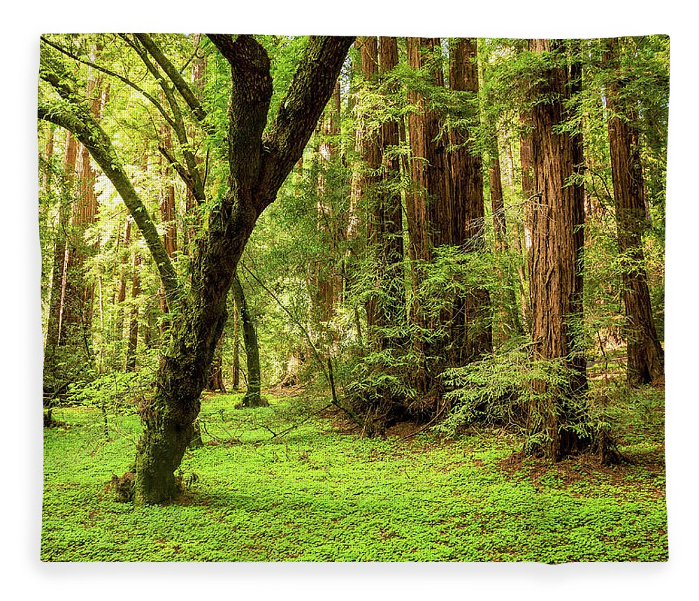 Tranquility Fleece Blanket featuring the photograph Muir Woods Forest by By Ryan Fernandez