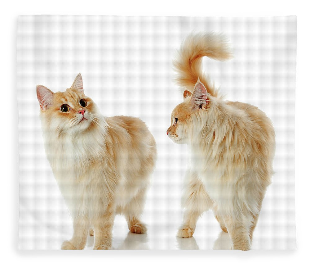 Humor Fleece Blanket featuring the photograph Munchkin Cats by Ultra.f