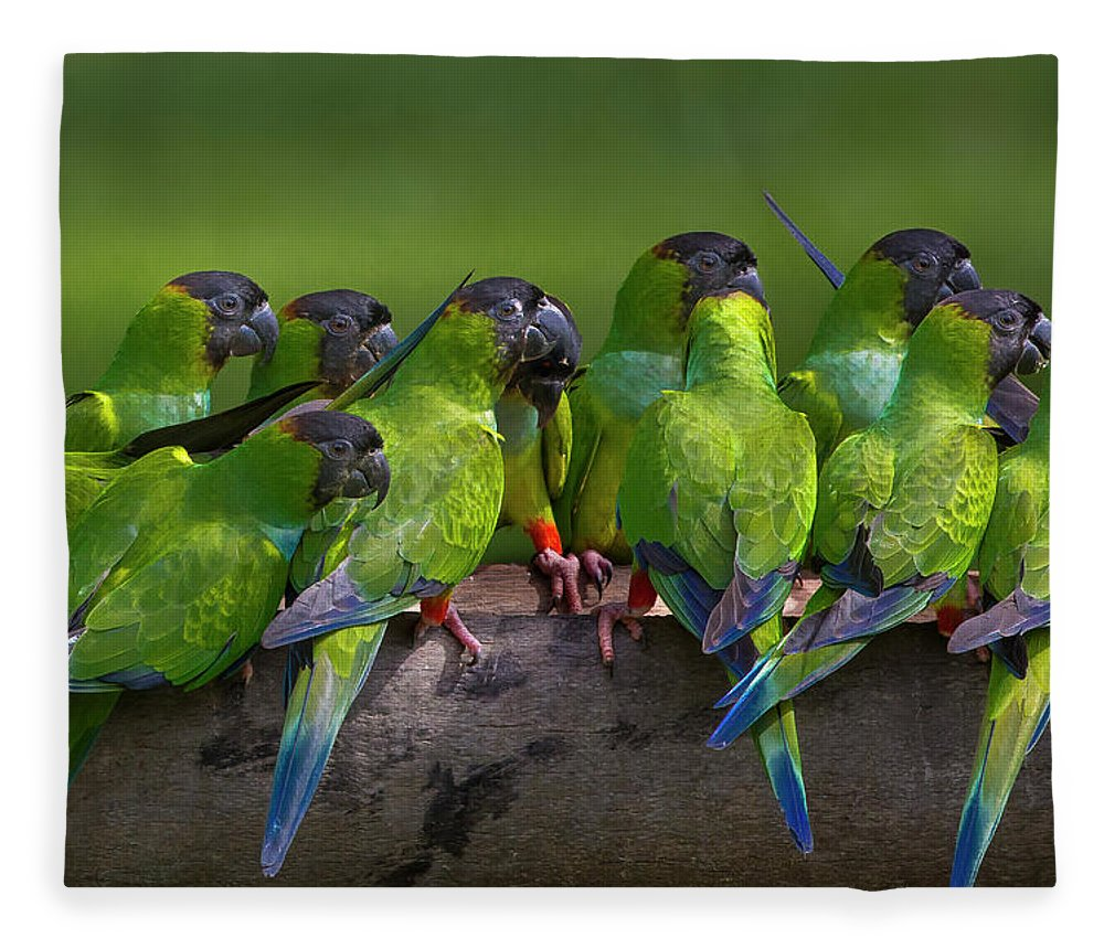 Vertebrate Fleece Blanket featuring the photograph Nanday Parakeets Perched In A Row In by Mint Images - Art Wolfe