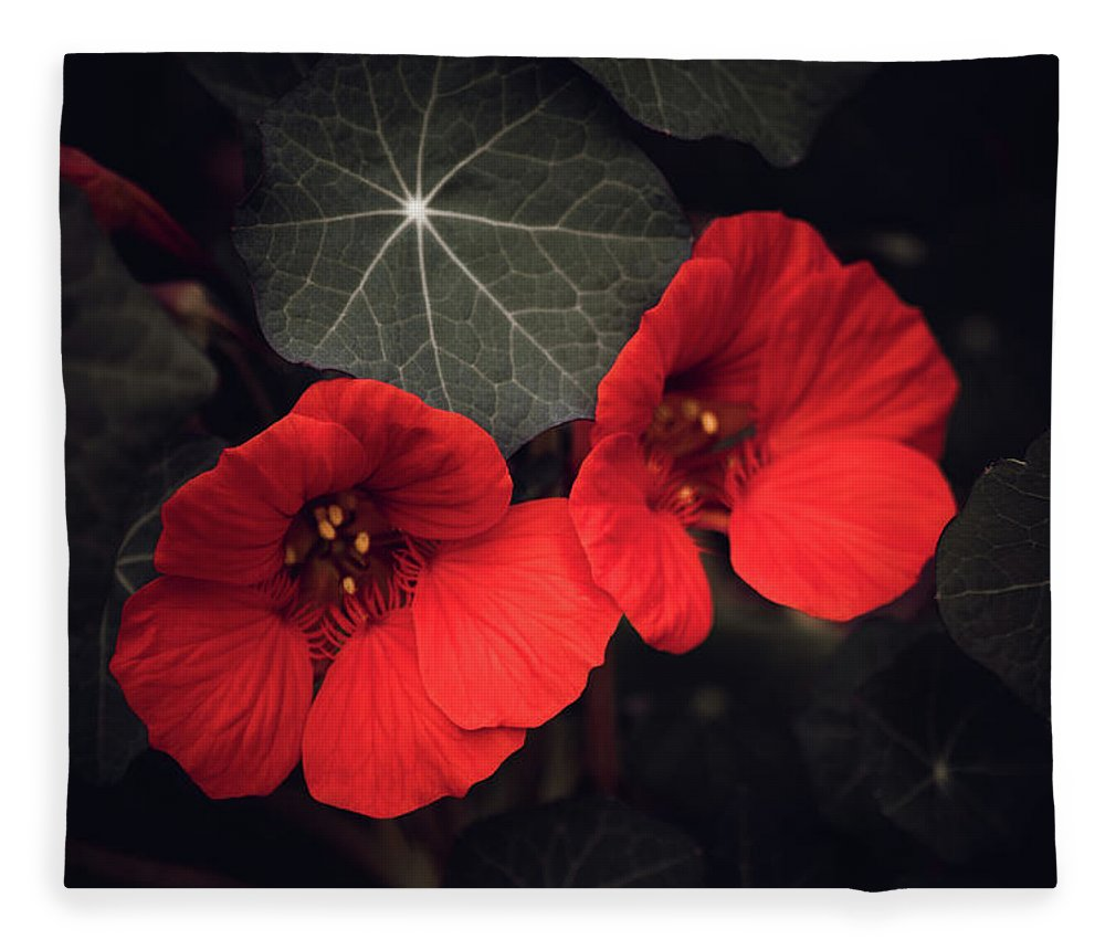 Selective Color Fleece Blanket featuring the mixed media Nasturtium Drama by Bonnie Bruno