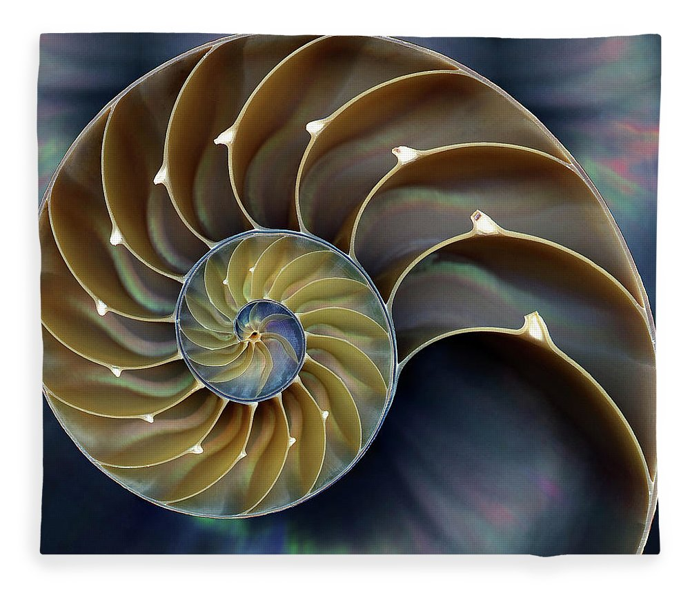 Cephalopod Fleece Blanket featuring the photograph Nautilus by 0049-1215-16-2610334597