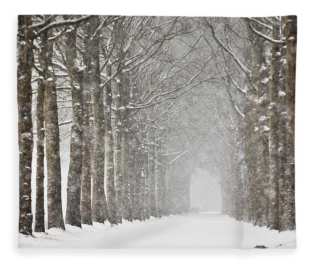 North Holland Fleece Blanket featuring the photograph Netherlands, Beech Trees In Snow Storm by Frans Lemmens