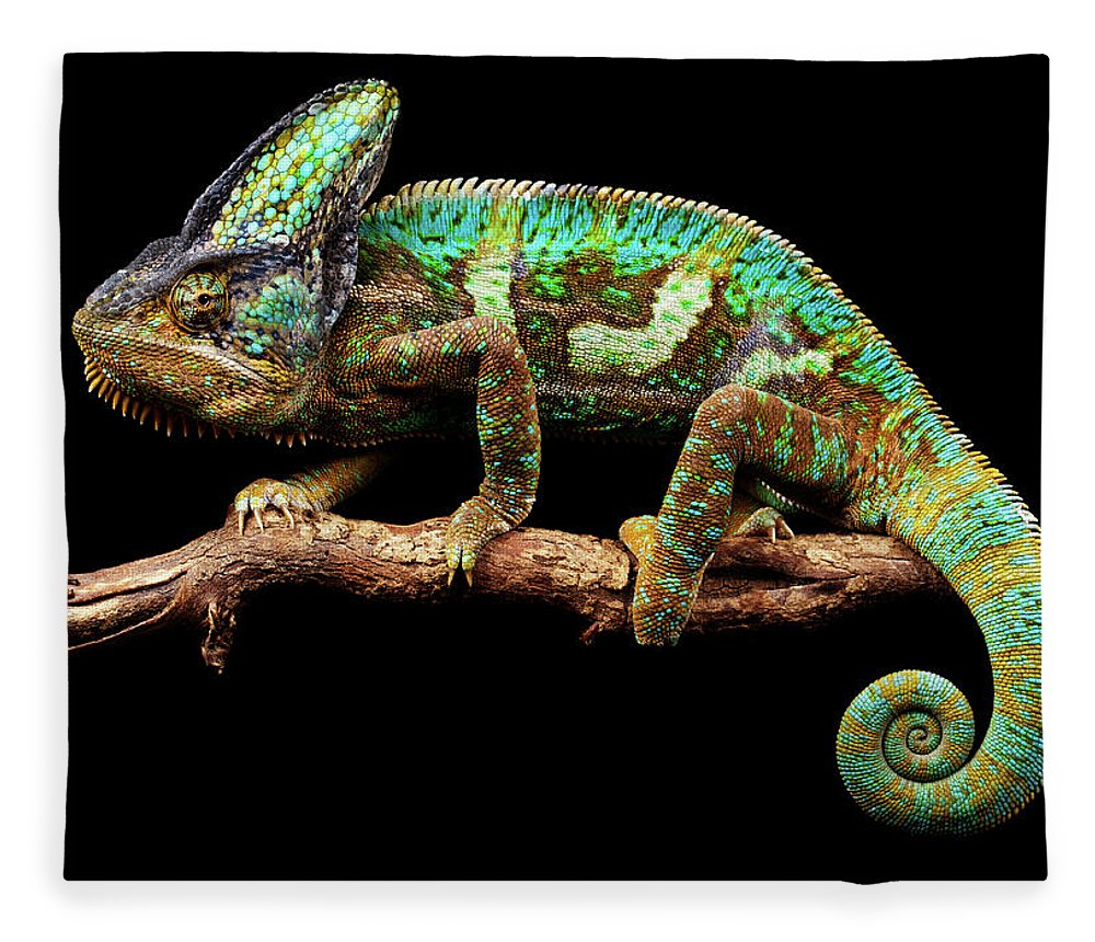 Animal Themes Fleece Blanket featuring the photograph Nice And Slow by Markbridger