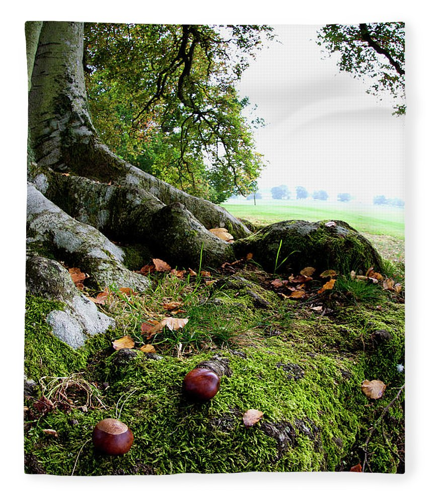 Nut Fleece Blanket featuring the photograph Nuts And Fallen Leaves At The Foot Of A by John Short / Design Pics