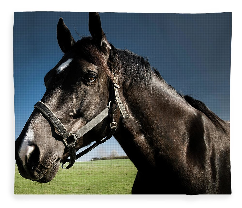 Horse Fleece Blanket featuring the photograph On The Meadow by Pixalot