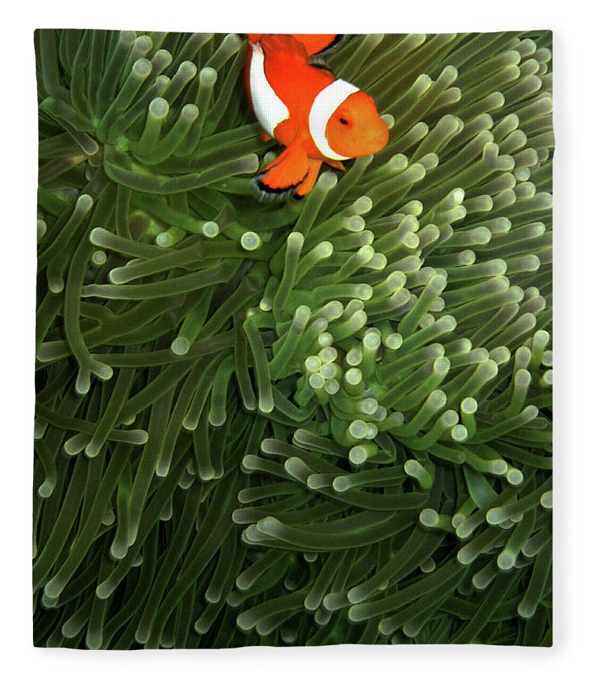 Underwater Fleece Blanket featuring the photograph Orange Fish With Yellow Stripe by Perry L Aragon
