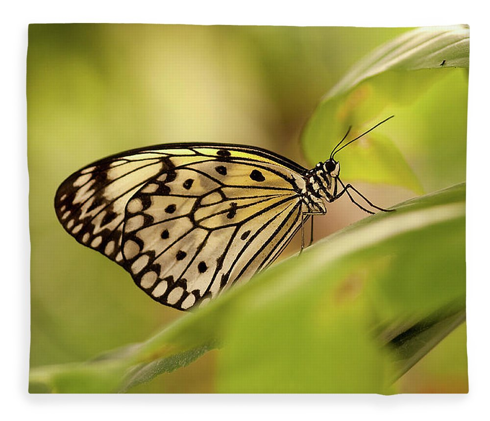 Natural Pattern Fleece Blanket featuring the photograph Paper Kite Butterfly by Photos By Jay Bee
