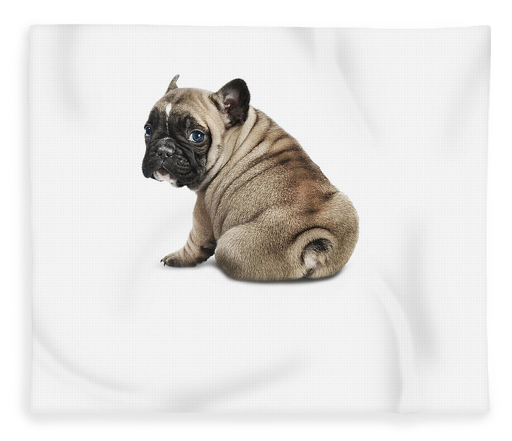 Pets Fleece Blanket featuring the photograph Pedigree French Bulldog Against A White by Andrew Bret Wallis