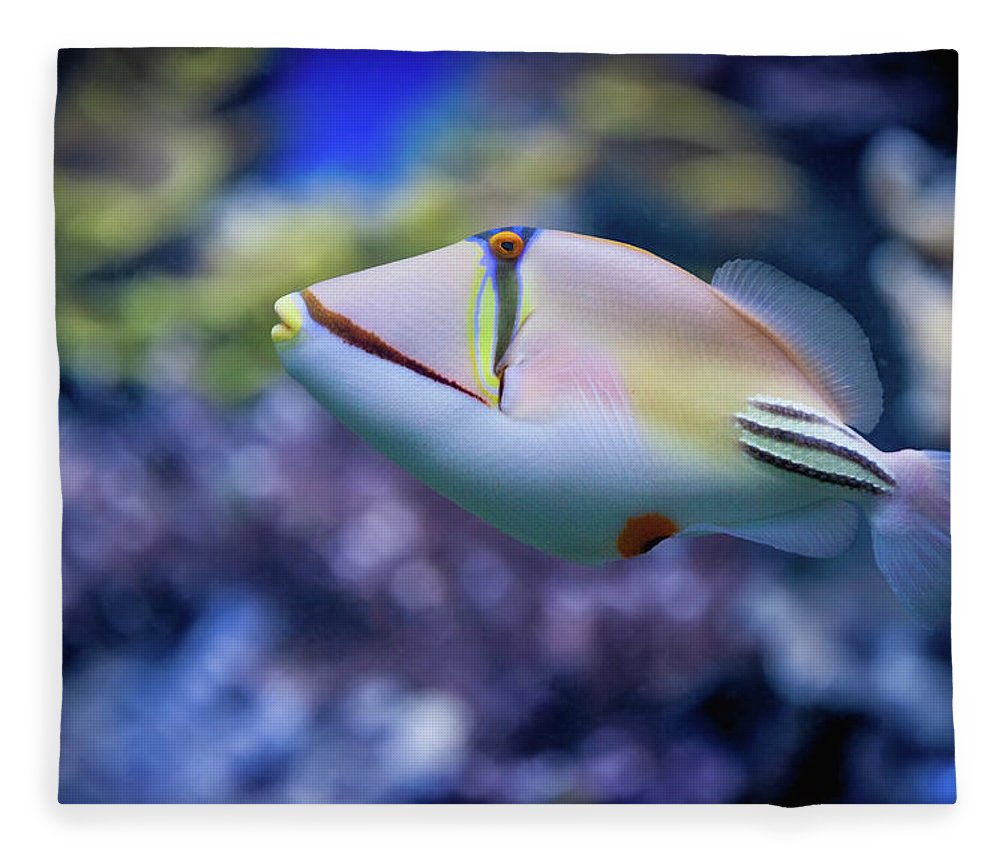 Underwater Fleece Blanket featuring the photograph Picasso Triggerfish by Reynold Mainse / Design Pics