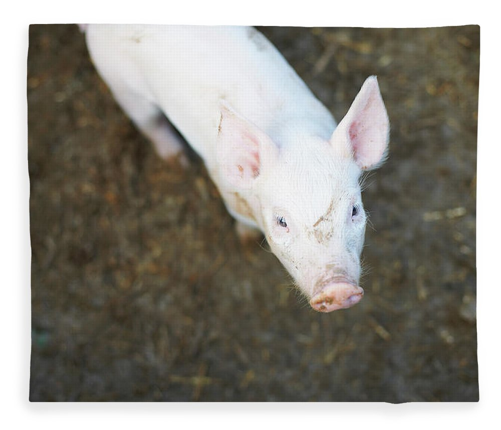 Pig Fleece Blanket featuring the photograph Pig Standing In Dirt Field by Peter Muller