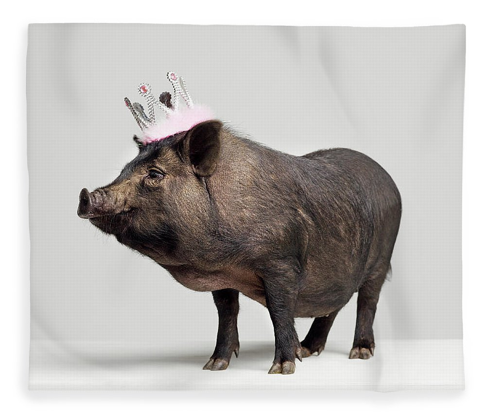 Crown Fleece Blanket featuring the photograph Pig With Toy Crown On Head, Studio Shot by Roger Wright