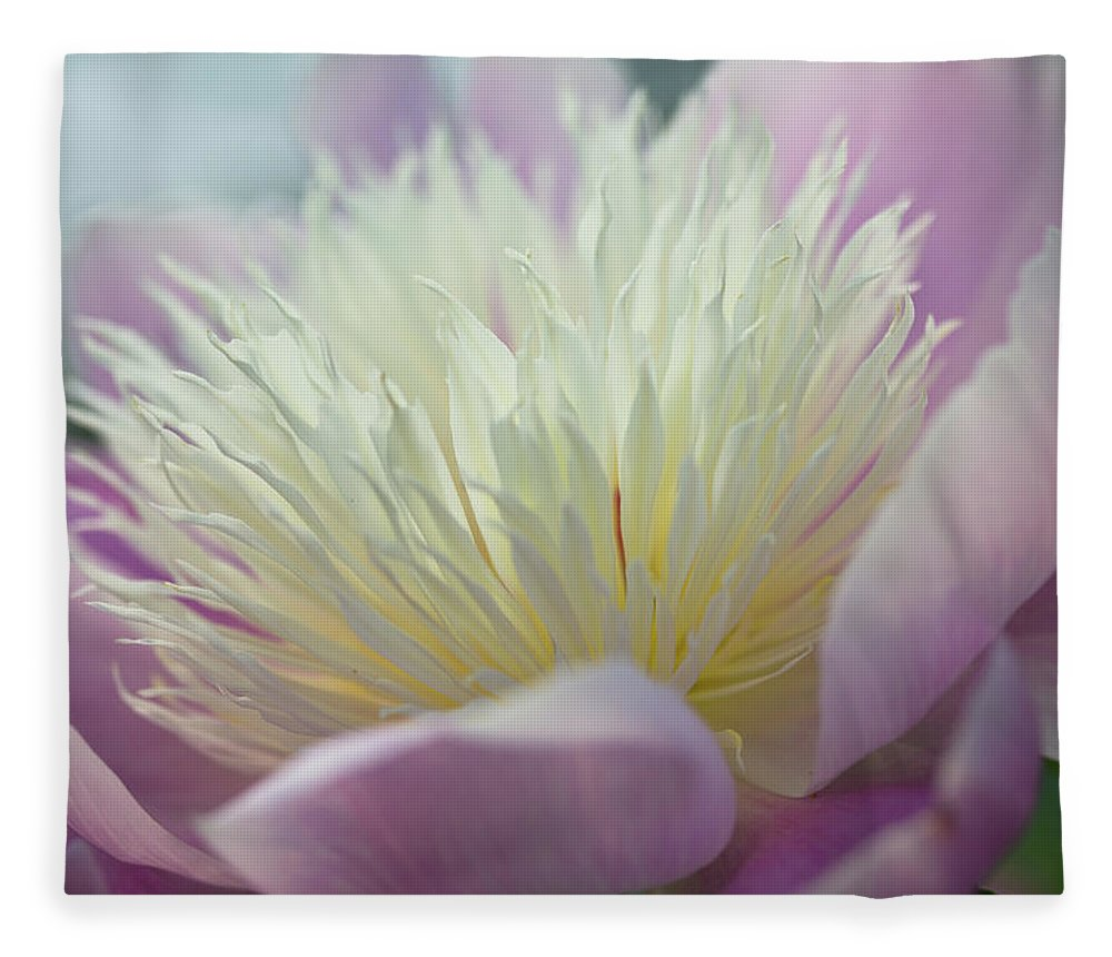 Toronto Fleece Blanket featuring the photograph Pink And White Peony by Lynda Murtha