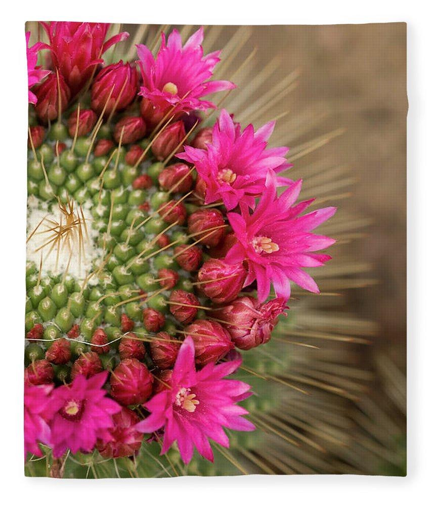Bud Fleece Blanket featuring the photograph Pink Cactus Flower In Full Bloom by Zepperwing