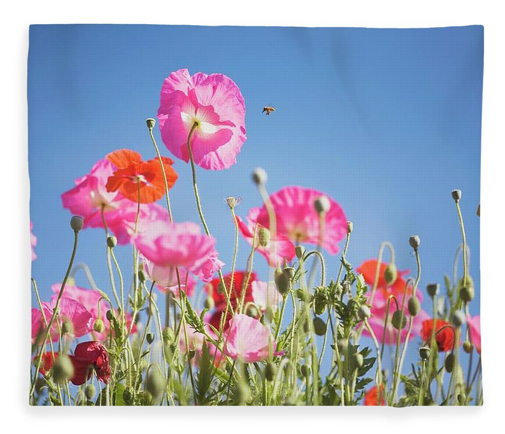 Snow Fleece Blanket featuring the photograph Pink Flowers Against Blue Sky by Design Pics/craig Tuttle
