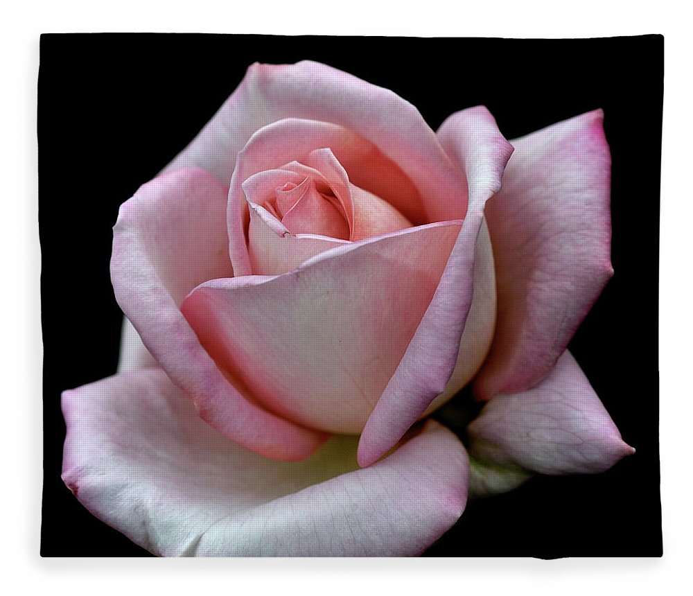 Part Of A Series Fleece Blanket featuring the photograph Pink Rose by I Love Photo And Apple.