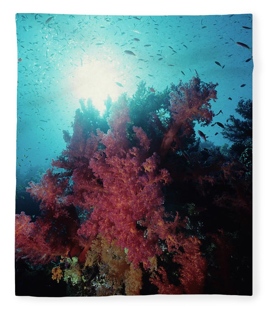 Underwater Fleece Blanket featuring the photograph Pink Soft Coral And Anthias by Tammy616
