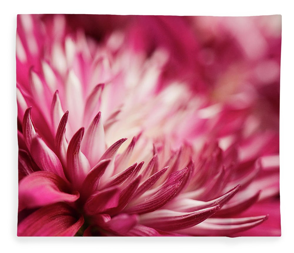 Petal Fleece Blanket featuring the photograph Poised Petals by Jody Trappe Photography