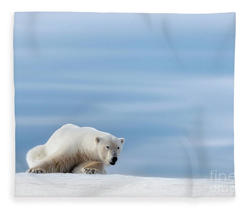 Polar Fleece Blanket featuring the photograph Polar Bear Crouching On The Frozen Snow Of Svalbard by Jane Rix