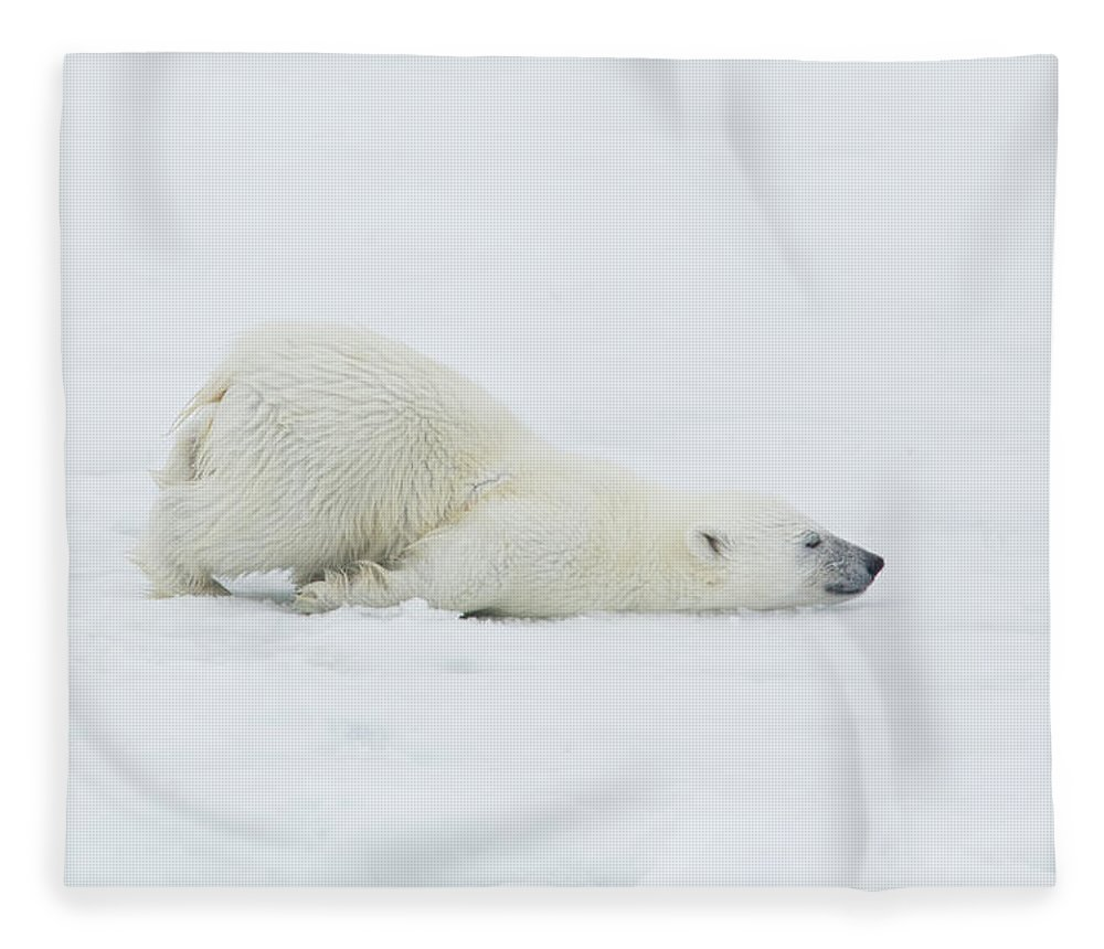 Svalbard Islands Fleece Blanket featuring the photograph Polar Bear Cub Stretching Out On Ice by Darrell Gulin
