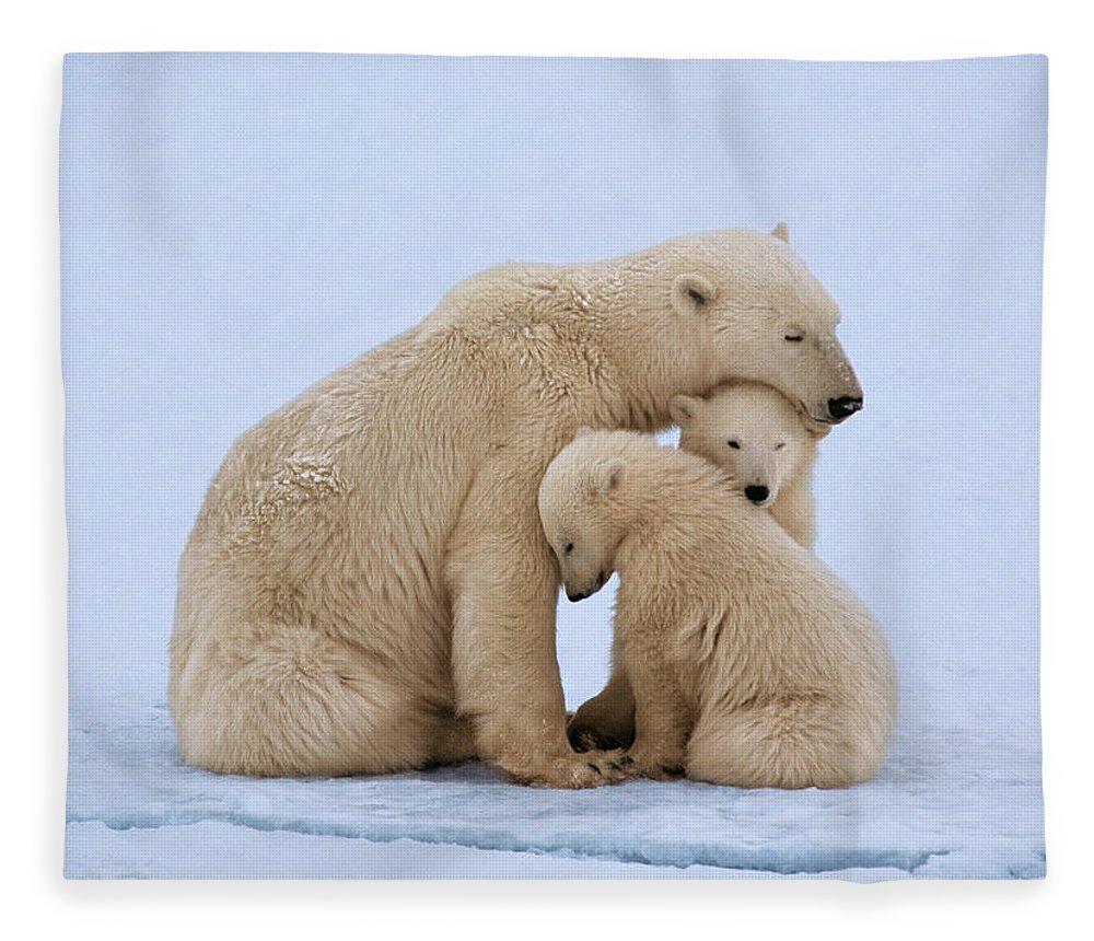 Bear Cub Fleece Blanket featuring the photograph Polar Bear With Twin Cubs Ursus by Johnny Johnson