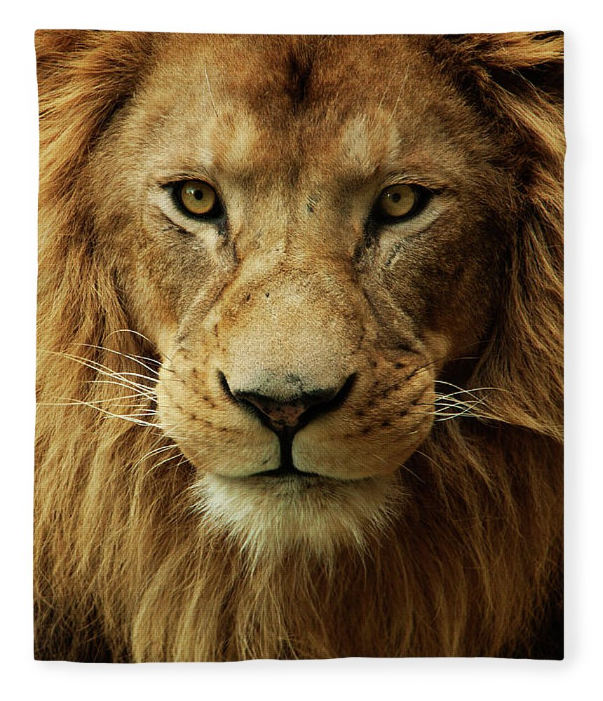 Animal Themes Fleece Blanket featuring the photograph Portrait Male African Lion by Brit Finucci