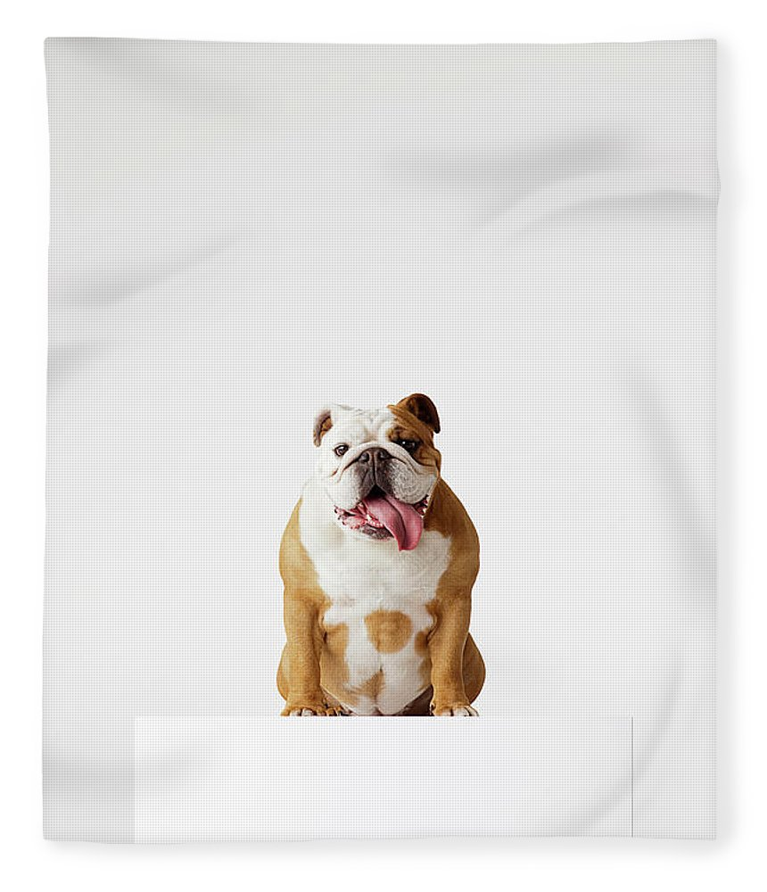 Pets Fleece Blanket featuring the photograph Portrait Of British Bulldog Sitting by Compassionate Eye Foundation/david Leahy