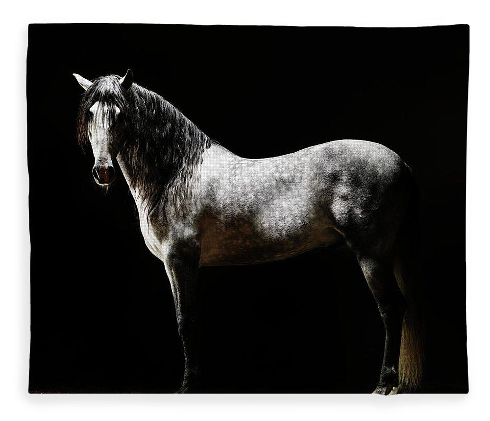 Horse Fleece Blanket featuring the photograph Portrait Of Standing Grey Horse by Henrik Sorensen
