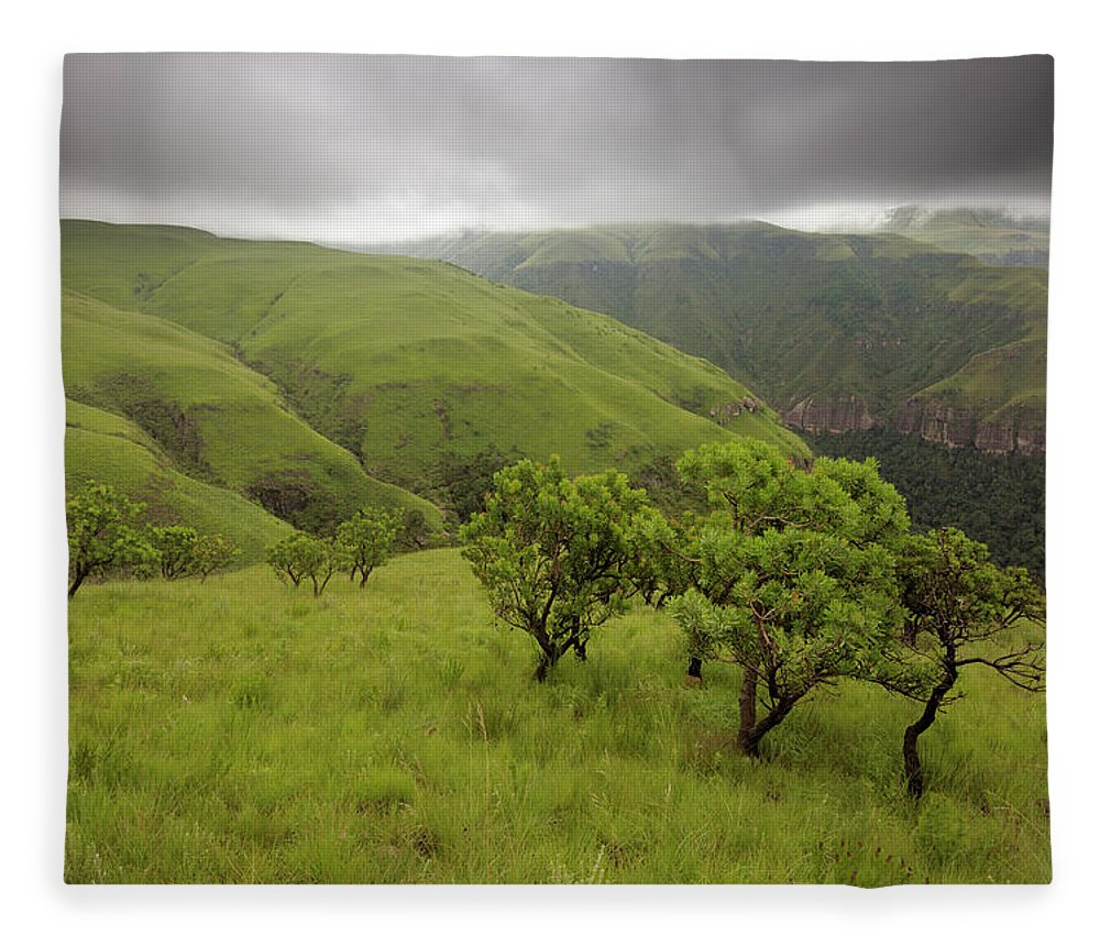 Scenics Fleece Blanket featuring the photograph Protea Trees Overlooking A Grassy by Emil Von Maltitz