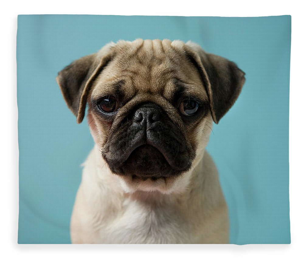 Pets Fleece Blanket featuring the photograph Pug Puppy Against Blue Background by Reggie Casagrande