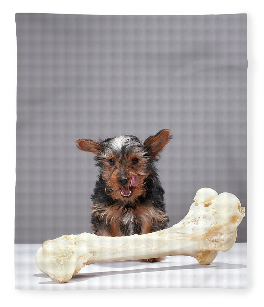 Pets Fleece Blanket featuring the photograph Puppy With Oversized Bone by Martin Poole