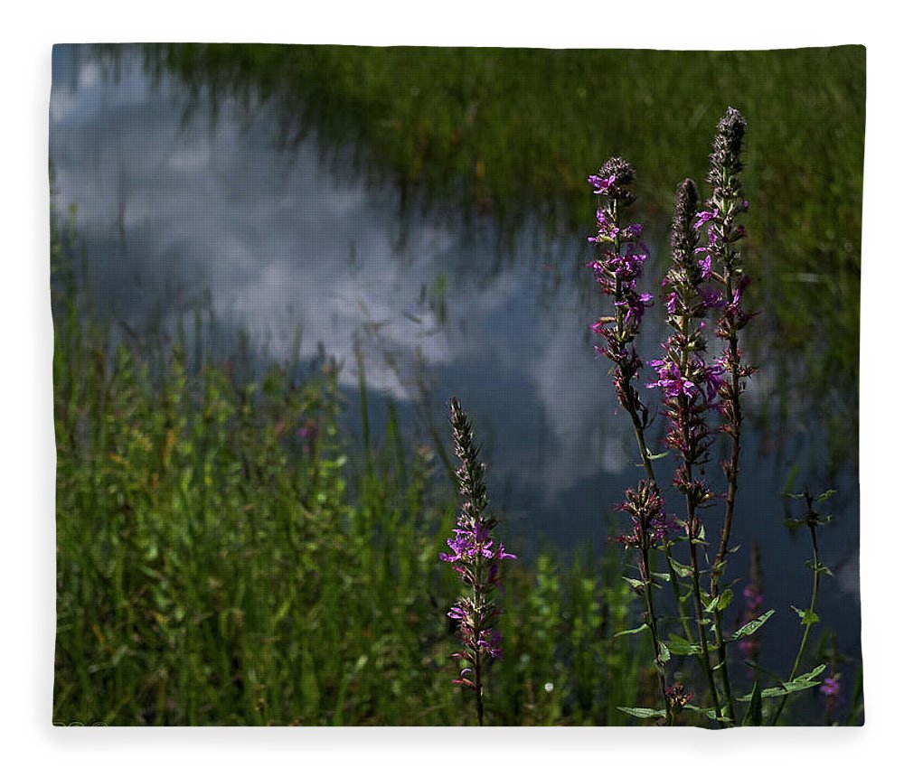 Purple Loosestrife Fleece Blanket featuring the photograph Purple Daydream by Jerry LoFaro