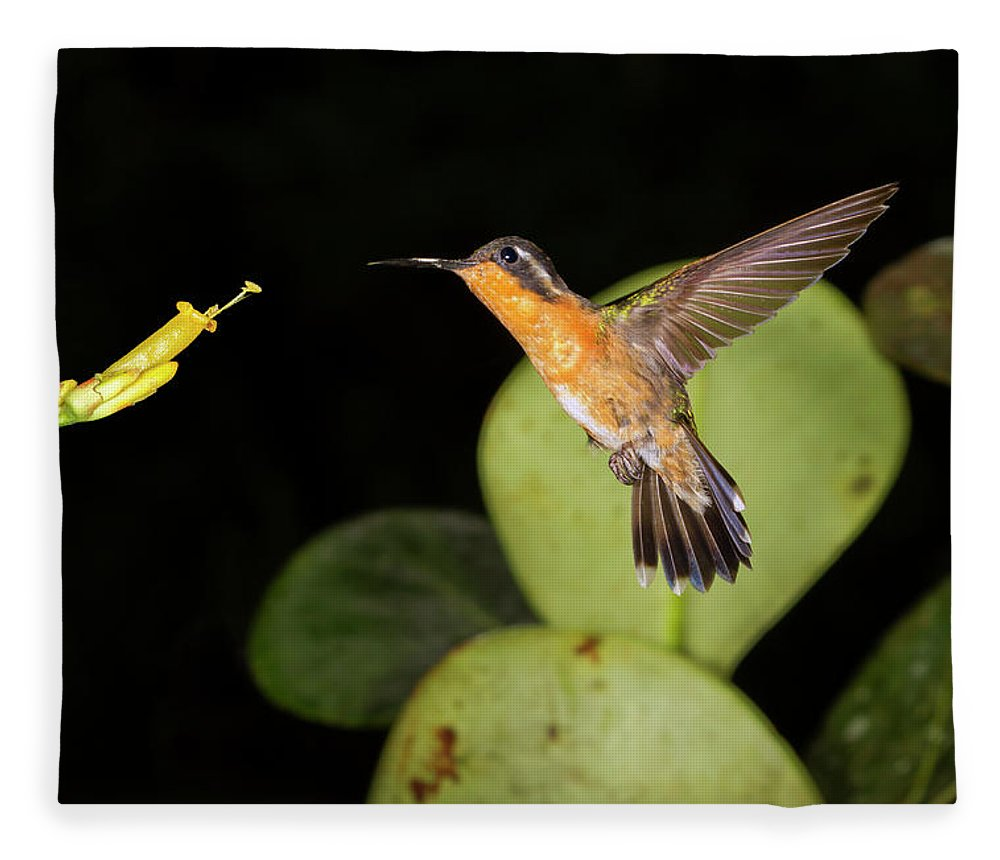 American Fauna Fleece Blanket featuring the photograph Purple-throated Mountaingem Female by Ivan Kuzmin