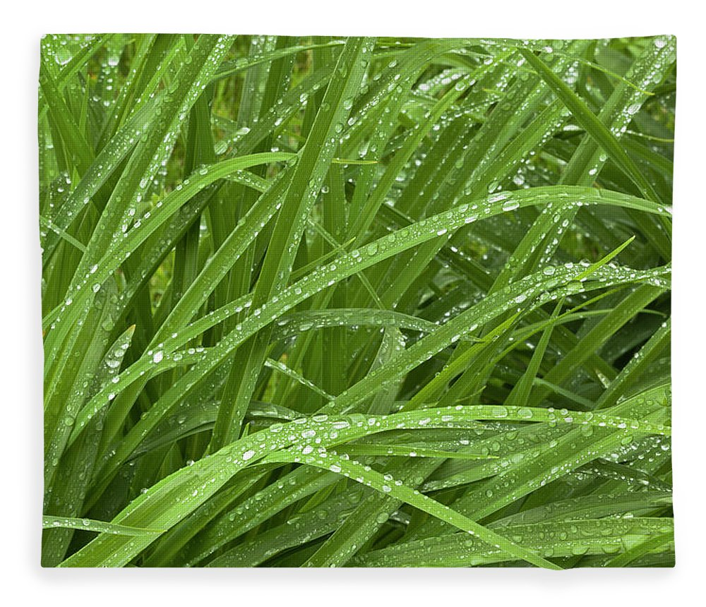Tranquility Fleece Blanket featuring the photograph Raindrops Of Daylily Foliage by Adam Jones